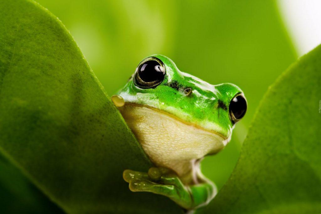 ż Jak żaba Zabawy Z Darami Froebel Przedszkole Rusałka